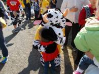 Audrey meets Champ the Cow!